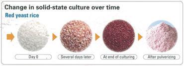 Red_rise_culture